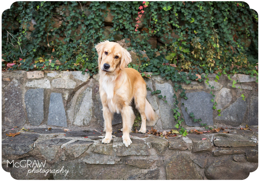 Pet Portraits in Charlotte NC