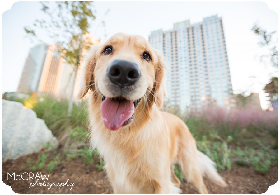 Uptown Charlotte Pet Portraits