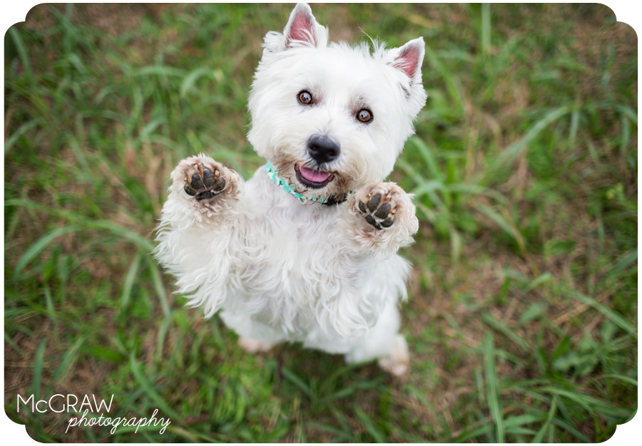 Pet Photography in Charlotte NC
