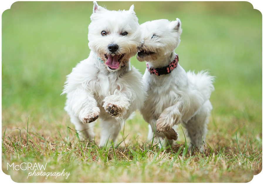 Pet Photographer in Charlotte area