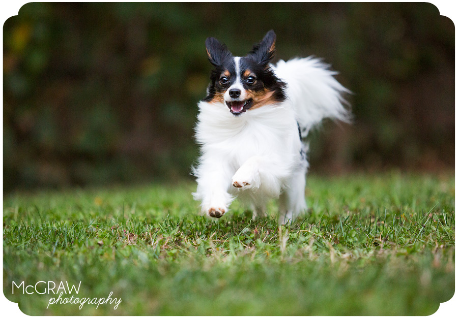 Charlotte NC Dog Photographer
