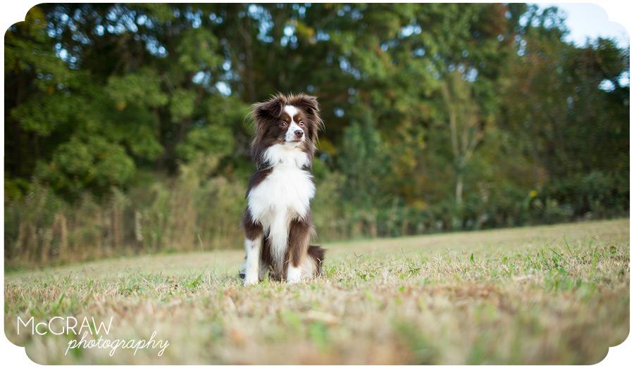 Dog Photographer in North Carolina
