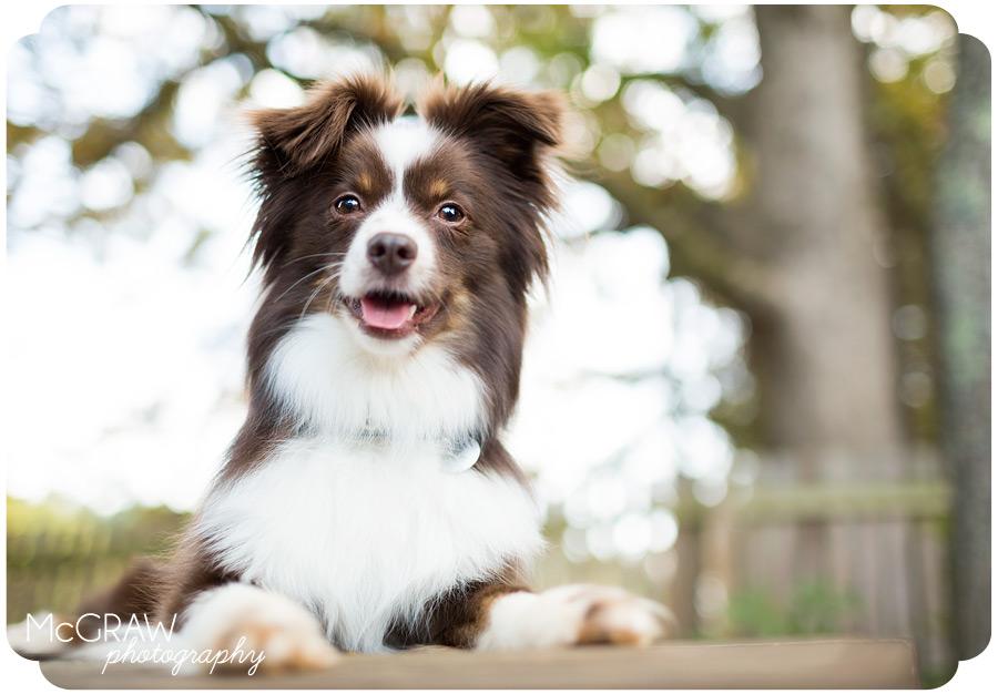 Salisbury NC Pet Photographer