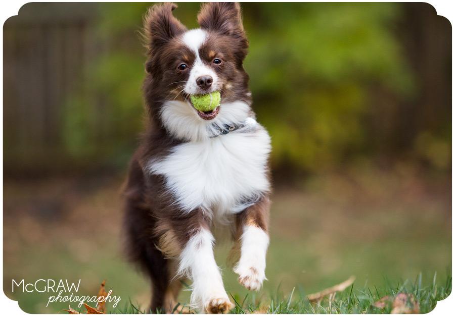 Salisbury NC Dog Photography