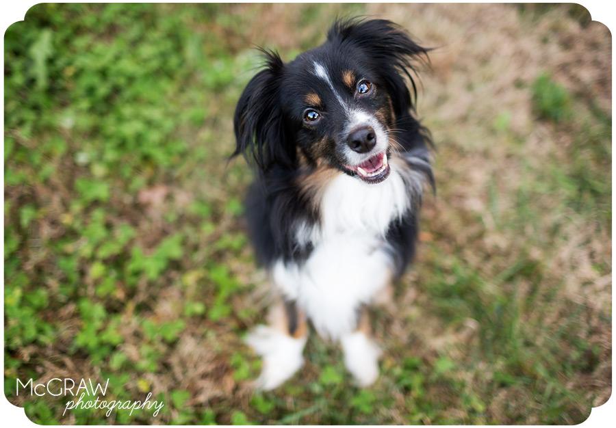 North Carolina Pet Portraits