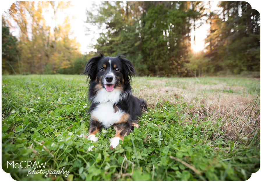 Pet Photographer in Charlotte NC