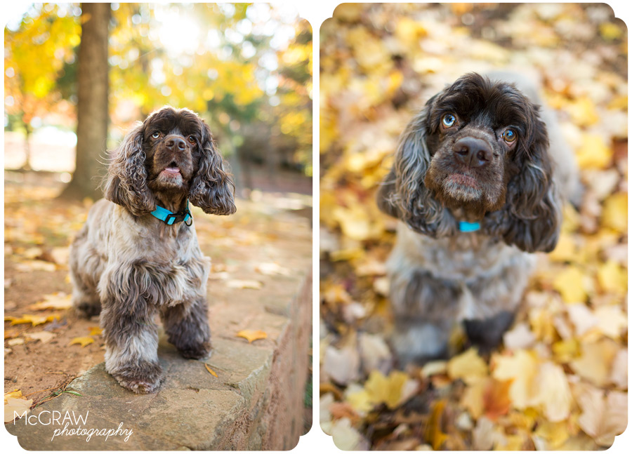 Charlotte NC Dog Portraits