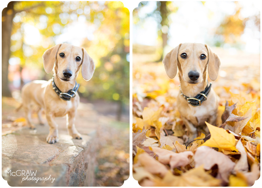 Animal Photographer in Charlotte NC