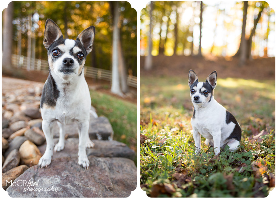 Mint Hill NC Pet Portraits