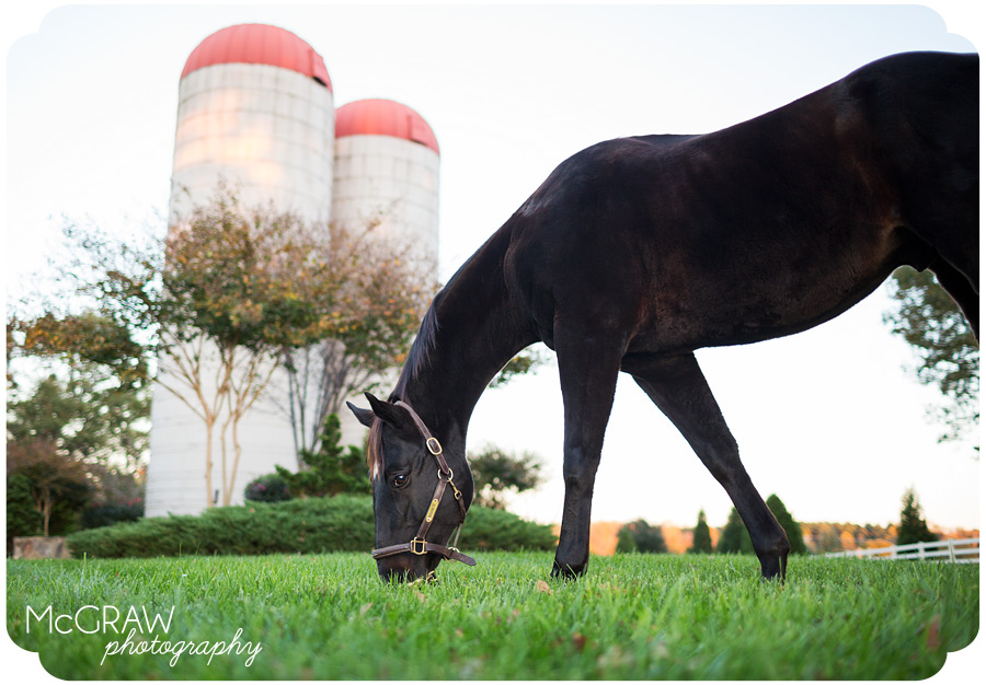 North Carolina Horse Photographer