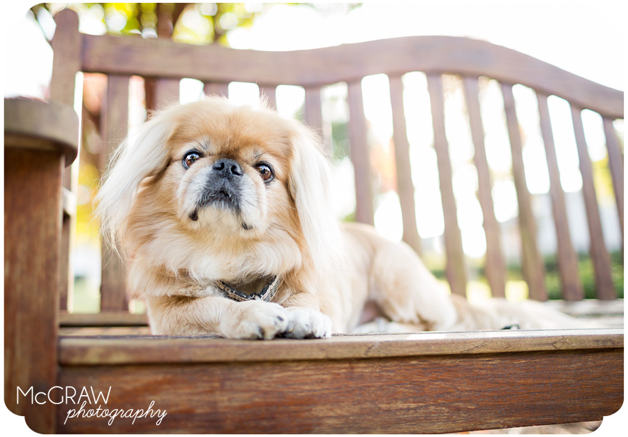 On-location Dog Portraits