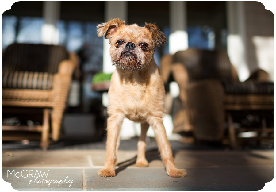 Pet Photographer in North Carolina