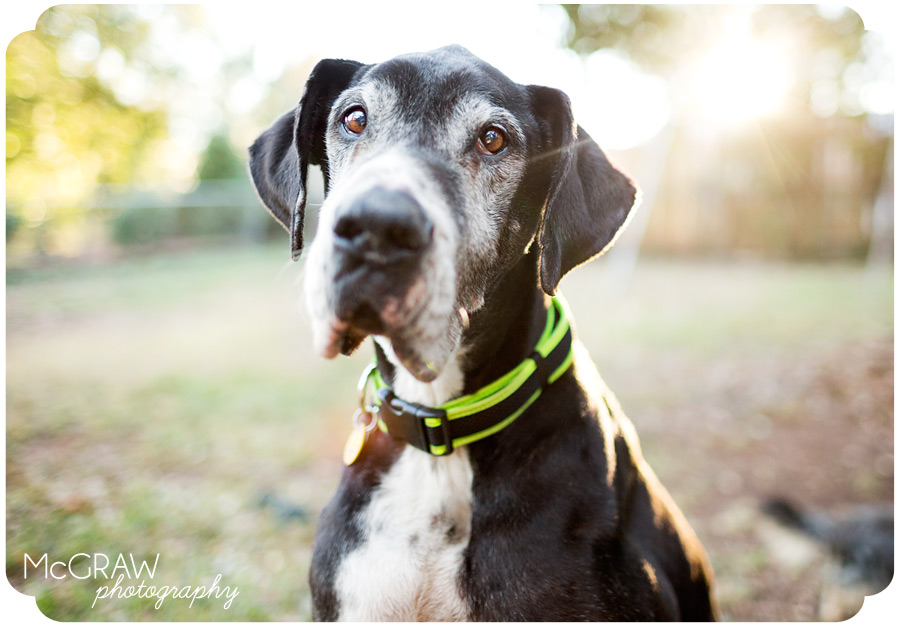 Charlotte NC Pet Photography