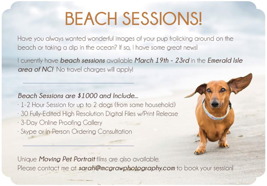 Pet Portrait Beach Sessions