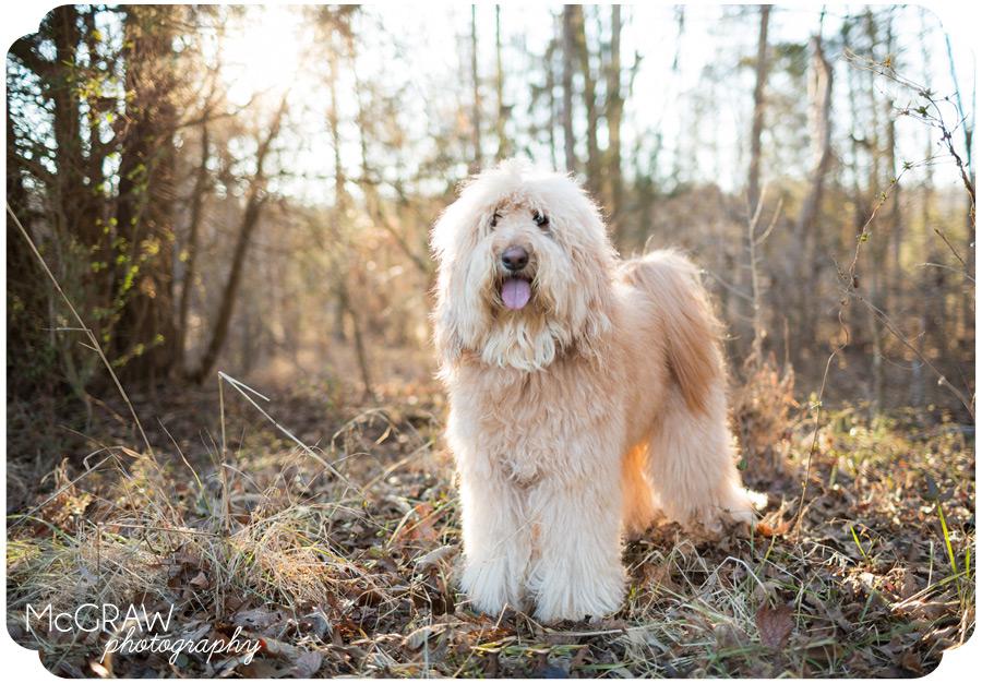Charlotte NC Dog Photographe