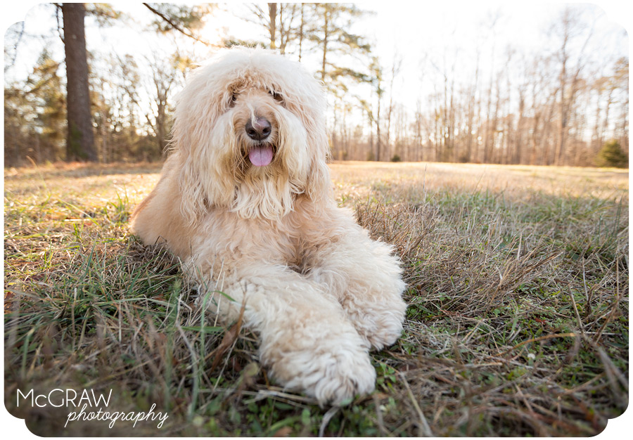 Pet Portrait Photographer in North Carolina