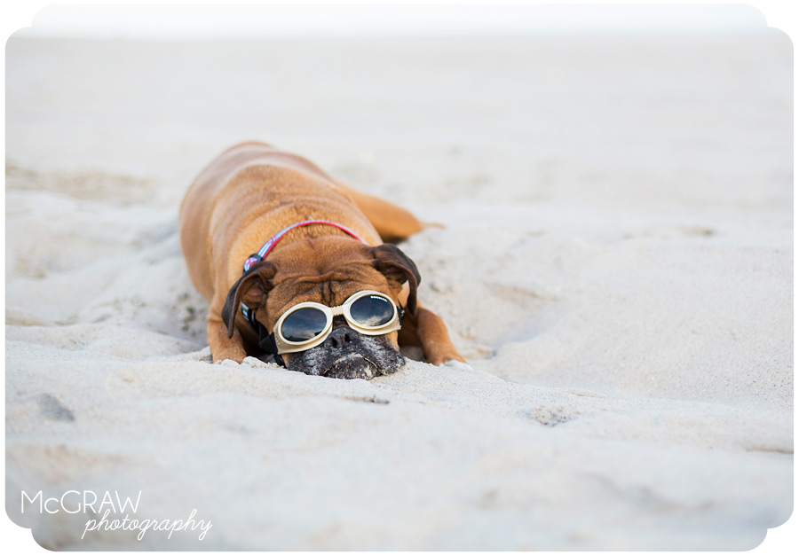Boxer on Beach with goggles