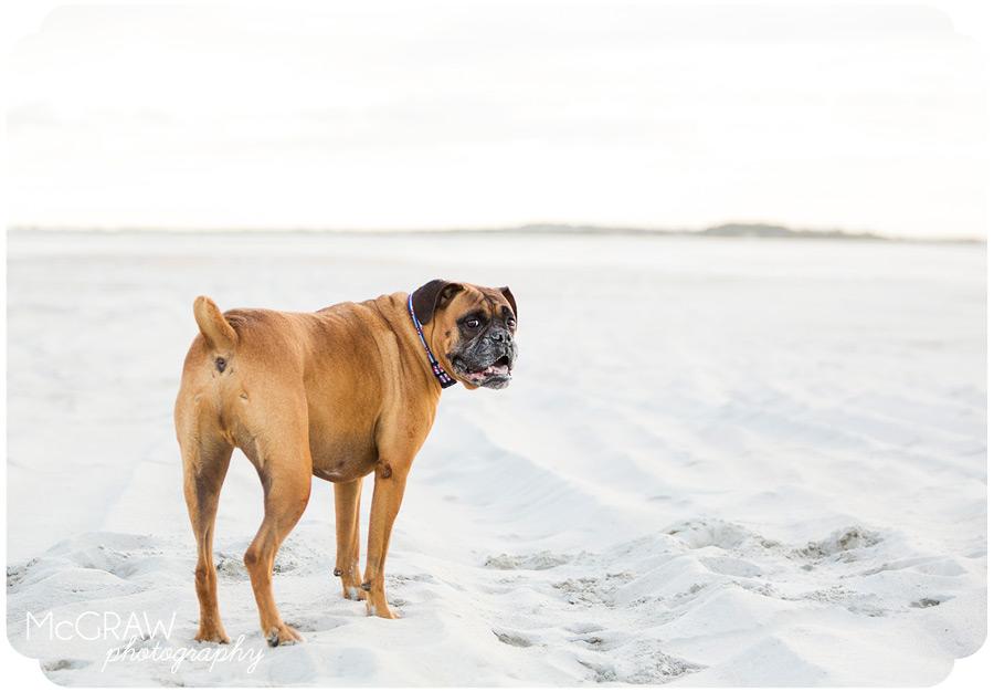 Emerald Isle Pet Photographer