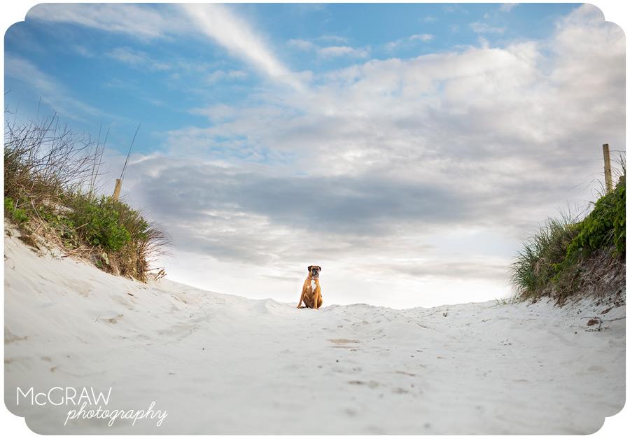 North Carolina Dog beach photo shoot