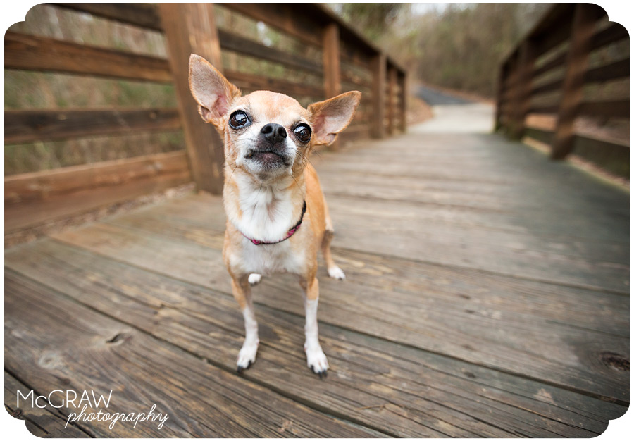 Lake Norman area Pet photographer