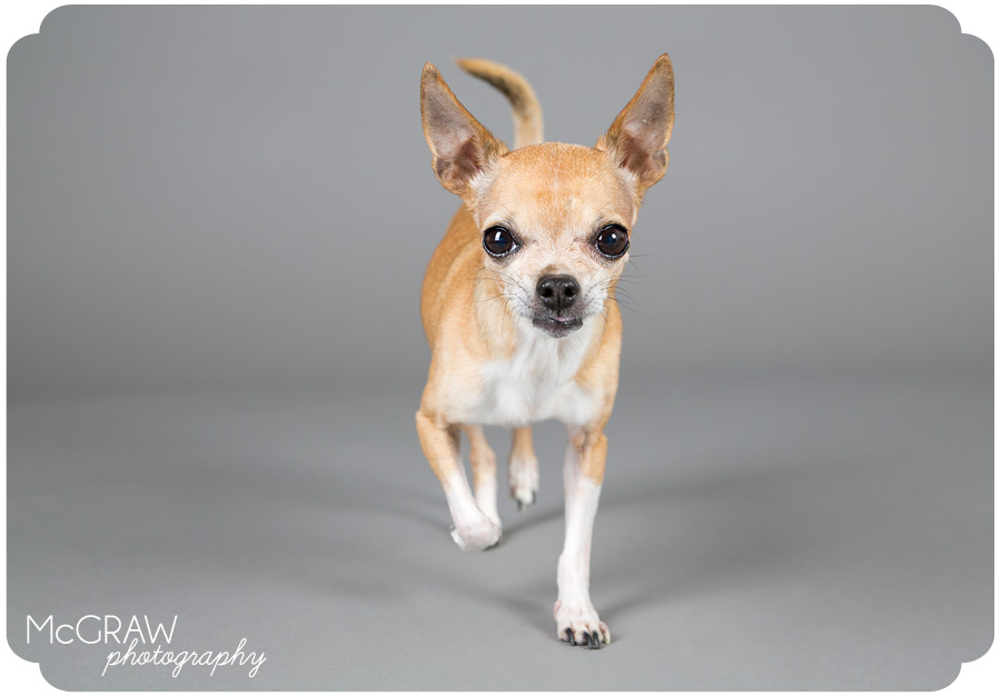 Modern Pet Studio Photography