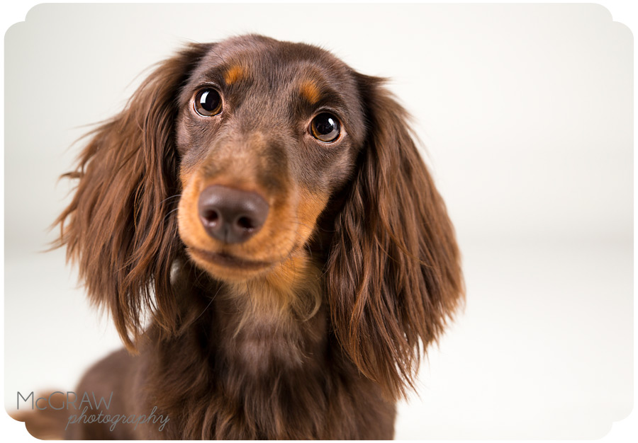 Doxies_2