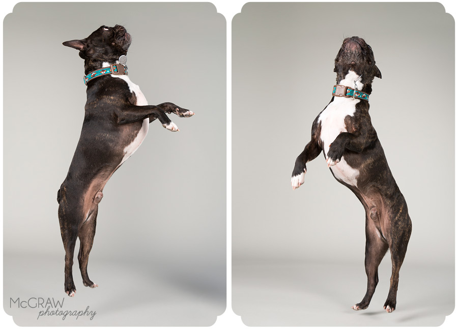 Modern Pet Studio Portraits