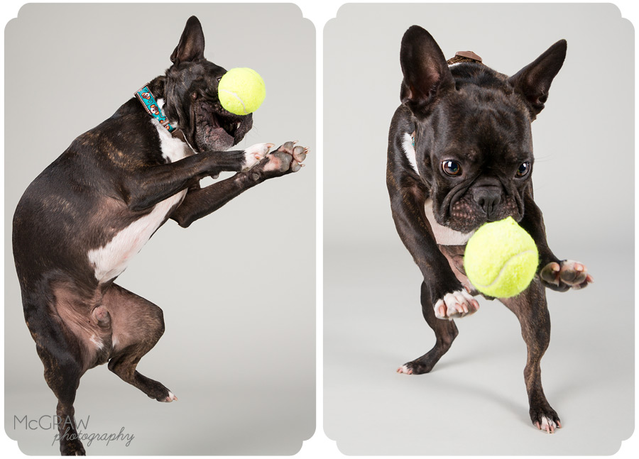 North Carolina Pet Studio Photographer
