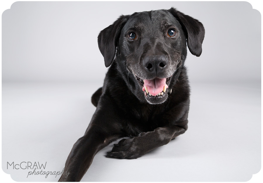 Charlotte NC Pet Studio Photographer