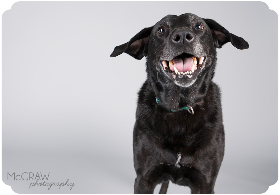 Charlotte NC Dog Studio Photographer