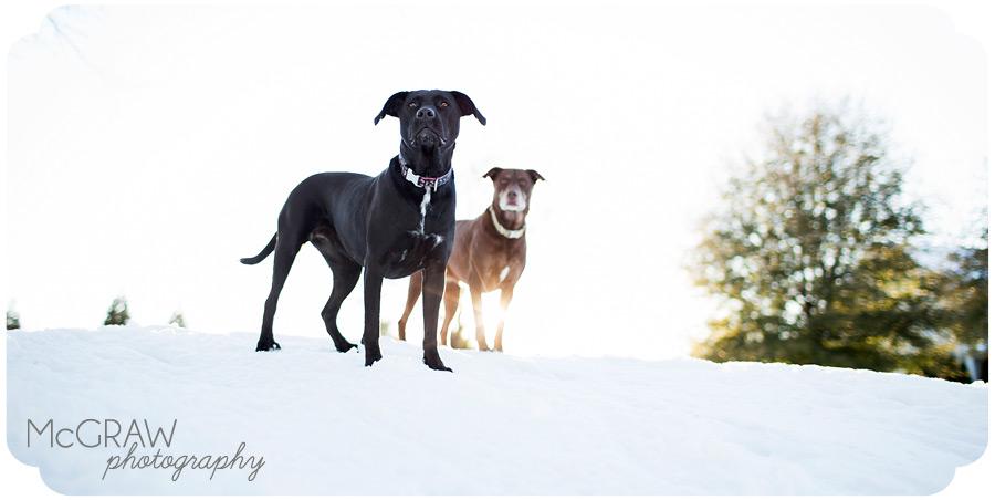 Charlotte NC Dog Photographer