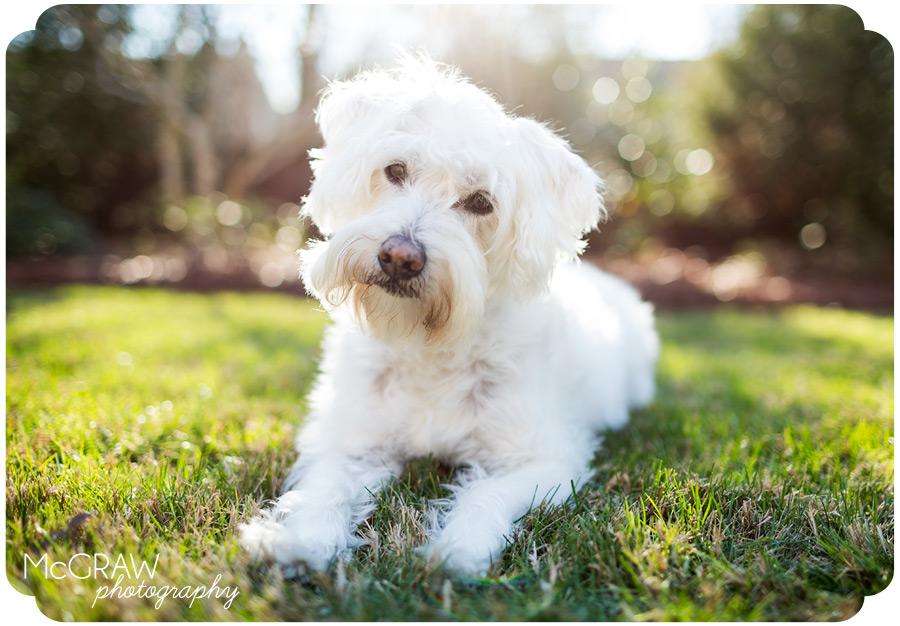 Carolinas Dog Portraits