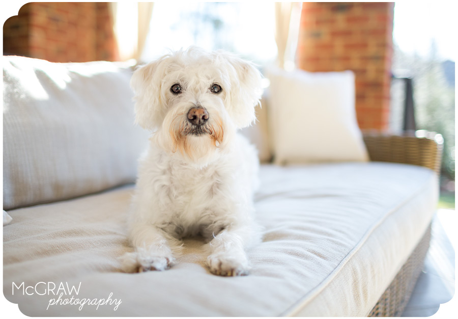 Charlotte Schnoodle Photography