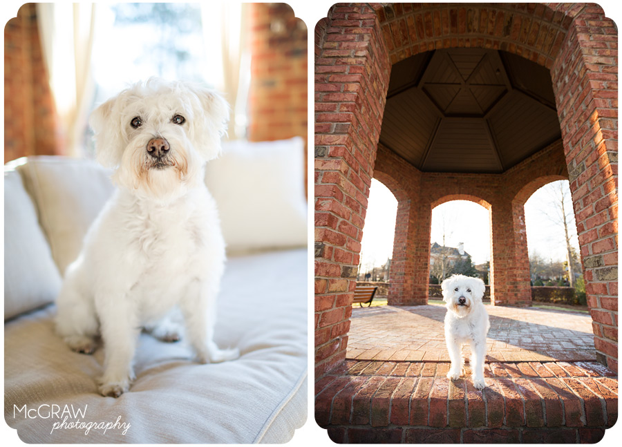 Sport_2Charlotte NC Pet Photographer
