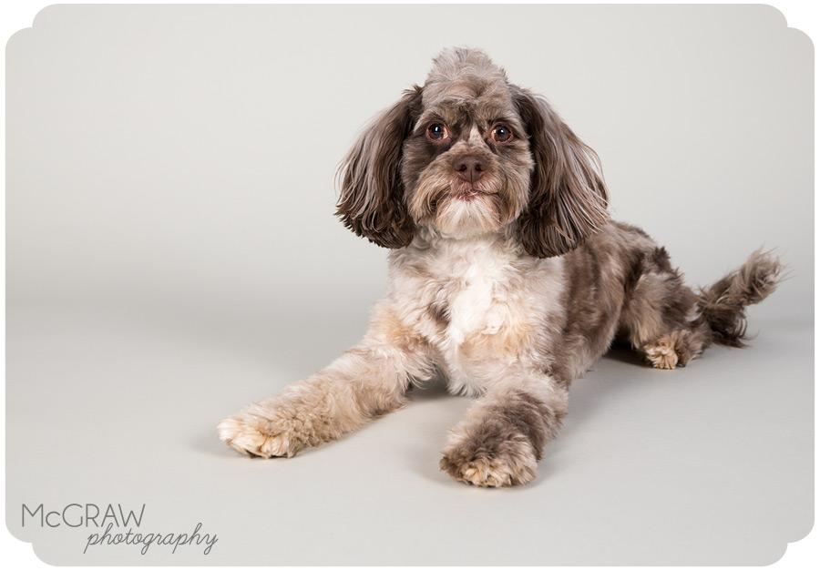 Modern Pet Studio Portraits