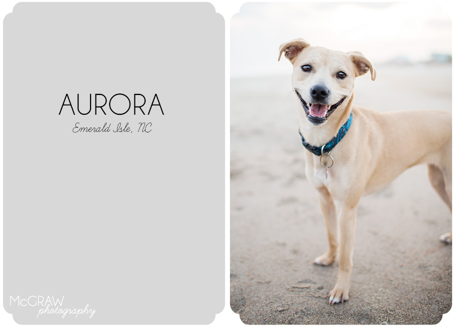 Crystal Coast Dog Photographer