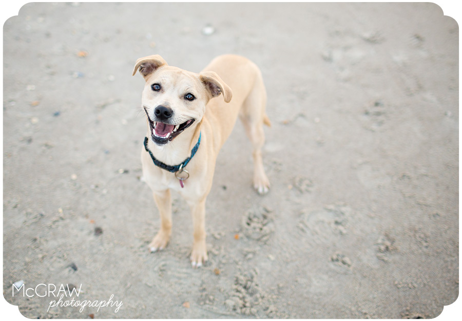Emerald Isle NC Pet Photographer
