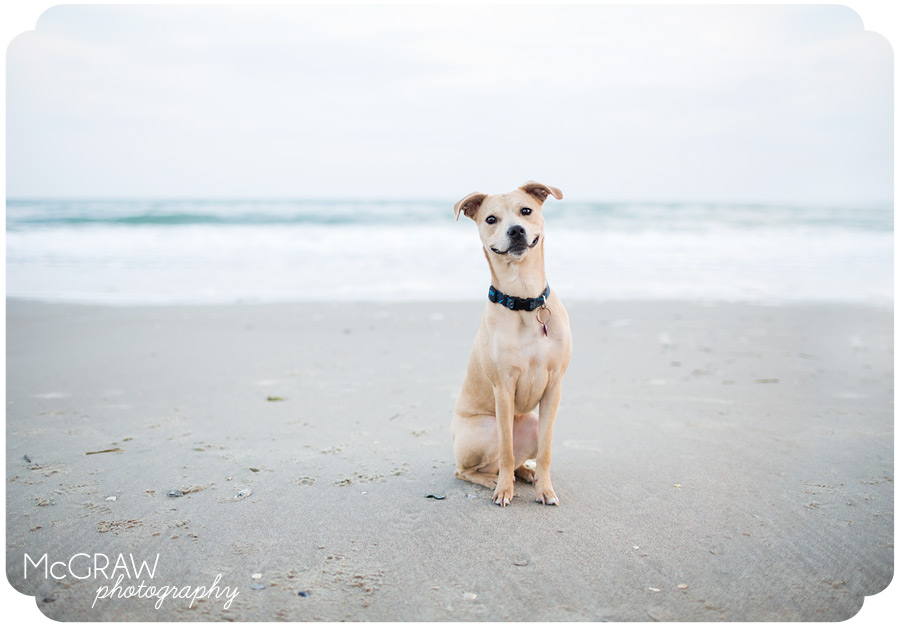North Carolina Beach Portraits