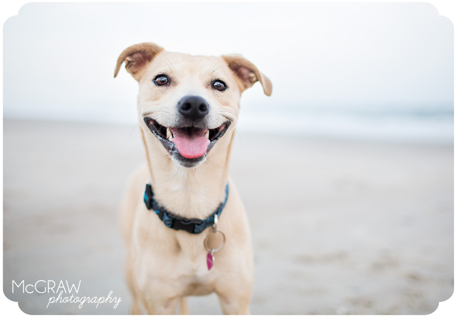 Dog Photography Beach Session