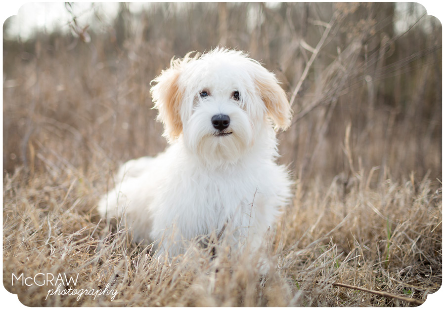 Fort Mill SC Dog Photographer