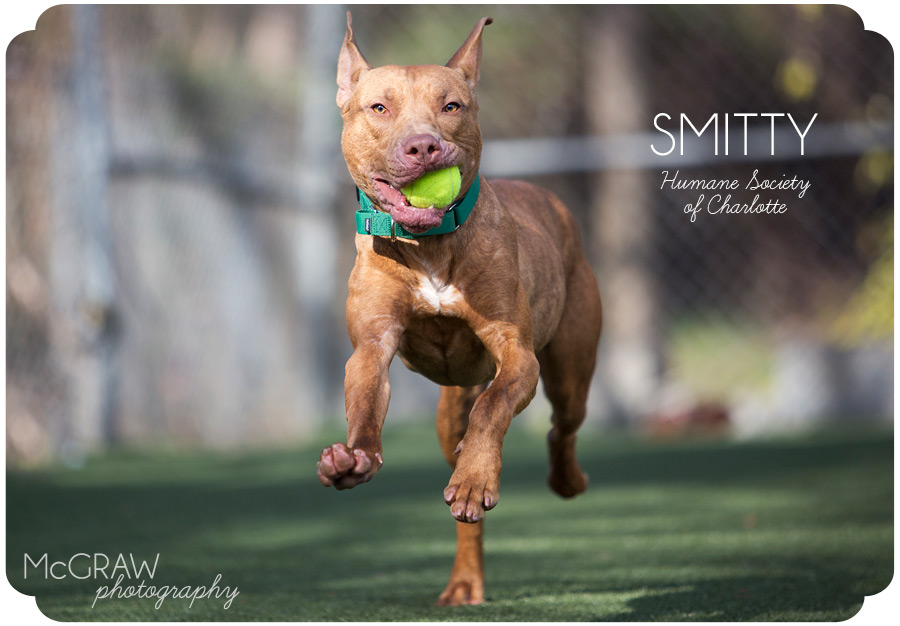 Adoptable dog photography