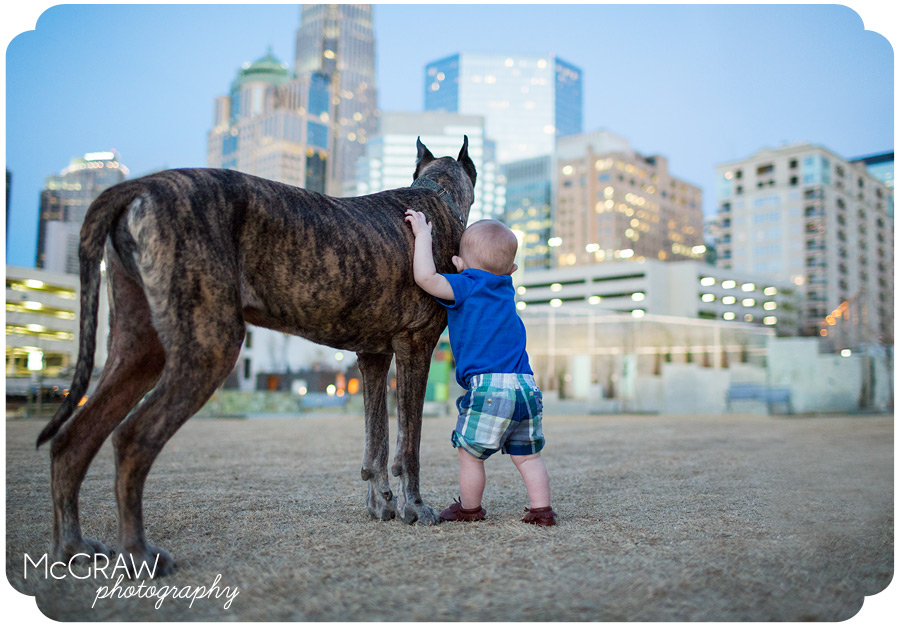 Uptown Charlotte Dog Photographer