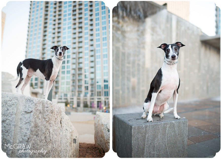 Downtown Charlotte NC Pet Portraits