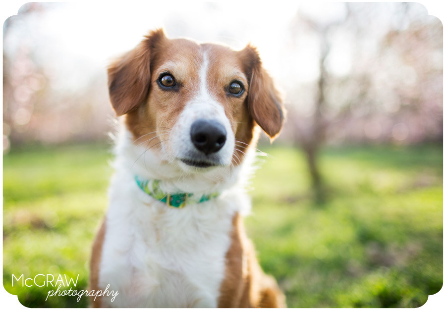 Dog Photographer in Charlotte