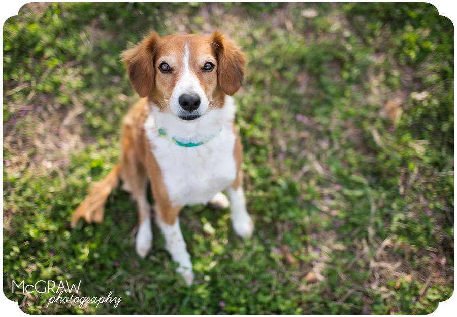 South Carolina Dog Photographer
