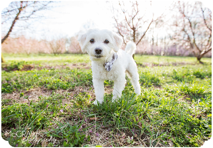 Fort Mill, SC Pet photographer