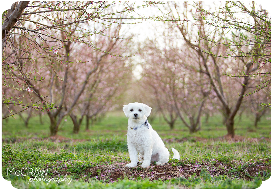 Fort Mill, SC dog photographer