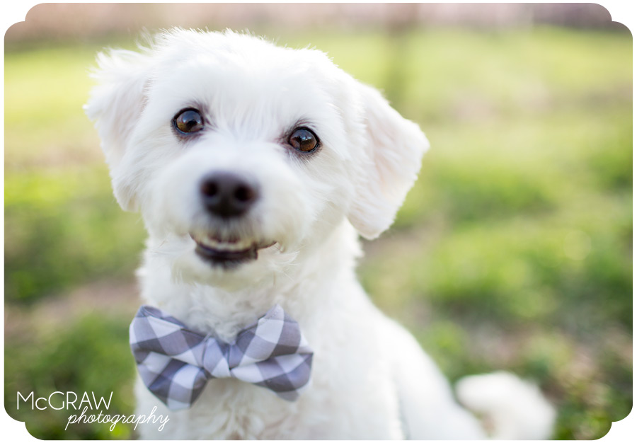 Fort Mill, SC Pet photography