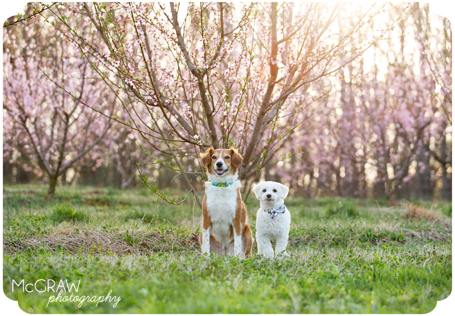 Peach tree Pet Portraits