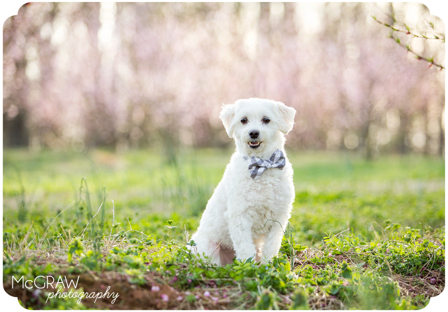 North Carolina Animal Portraits